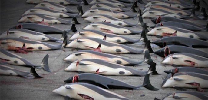 dolphin murder
